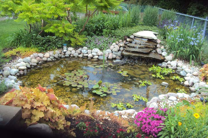 Making a Water Garden