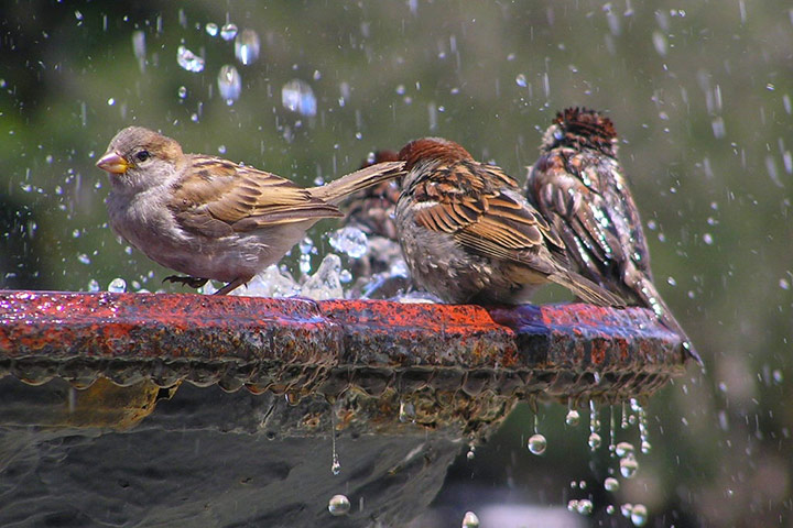 Birds Health Tips - Preventing Salmonellosis