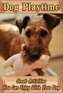 Dog Playtime - Great Activities You Can Enjoy With Your Dog