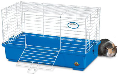 Equipment for your Guinea Pig