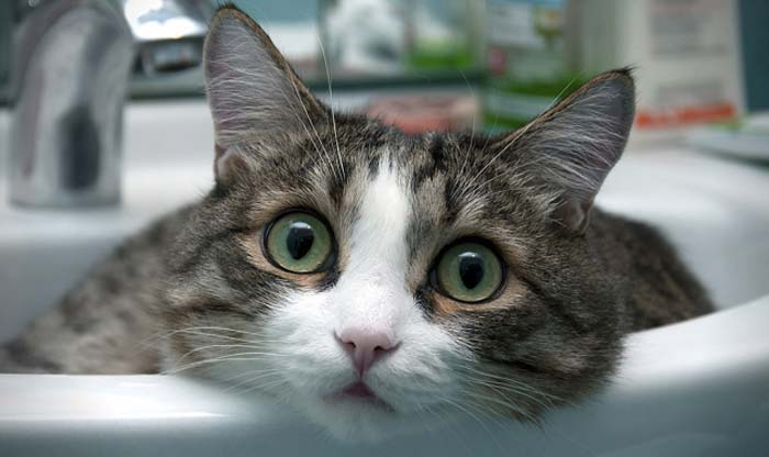 Quiet Corner:Funny Cats Compilation - Quiet Corner Funny Videos Of Cats