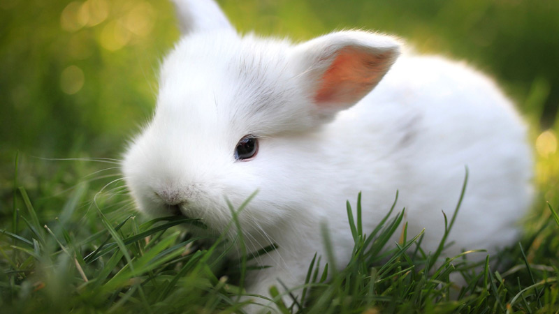 Is a Rabbit the Right Pet For You?
