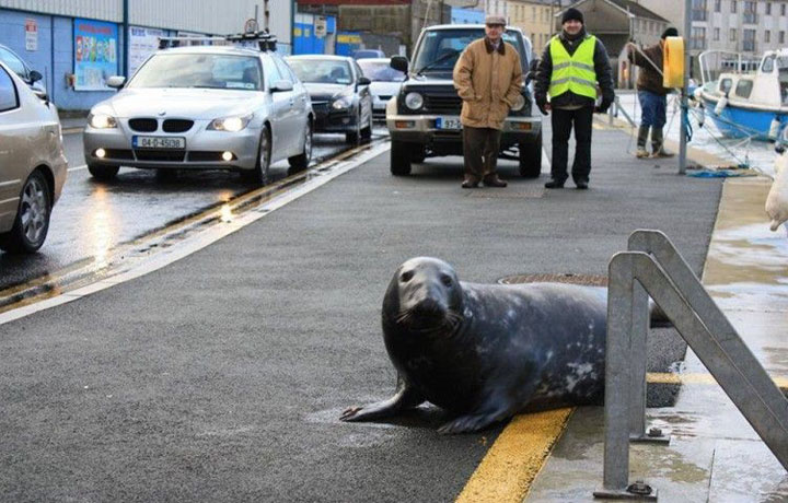 Sammy the Seal's Extraordinary Mealtime Ritual
