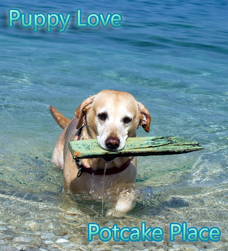 Potcake Place – Island Getaway Where You Cuddle Rescue Puppies Galore