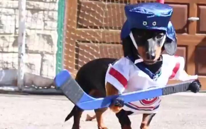 Crusoe & Oakley Dachshund Play Ball Hockey