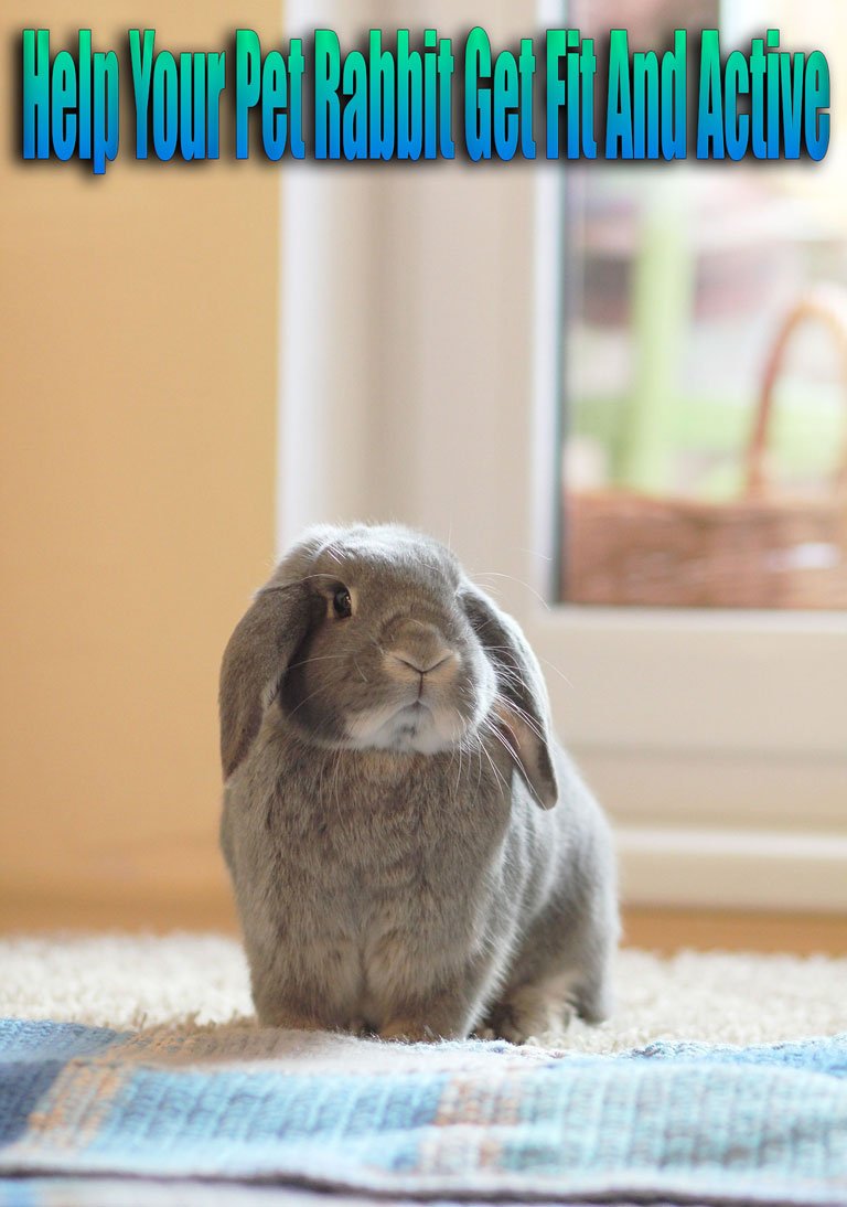 Help Your Pet Rabbit Get Fit And Active