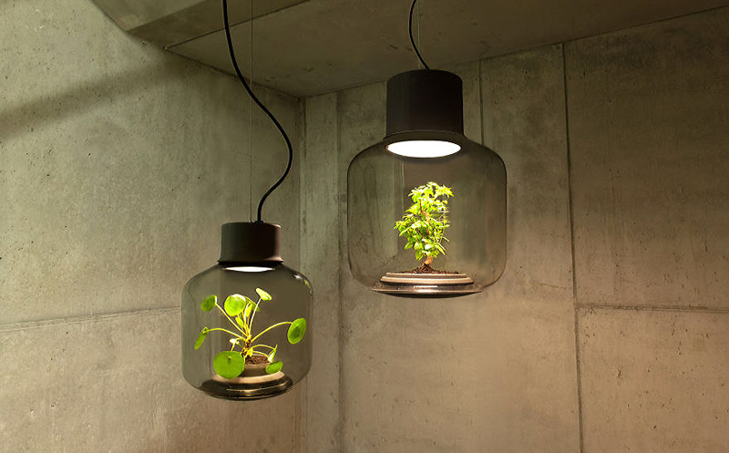 Terrarium-Lamps-by-Nui-Studio-1