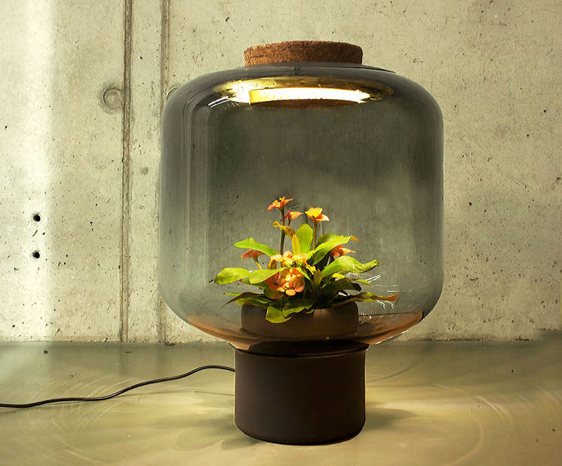 Terrarium-Lamps-by-Nui-Studio-2