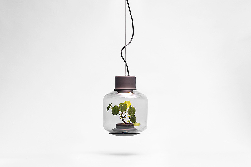 Terrarium-Lamps-by-Nui-Studio-7