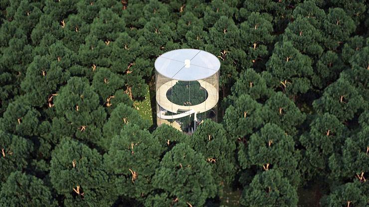 Tubular Glass House Built Around Tree