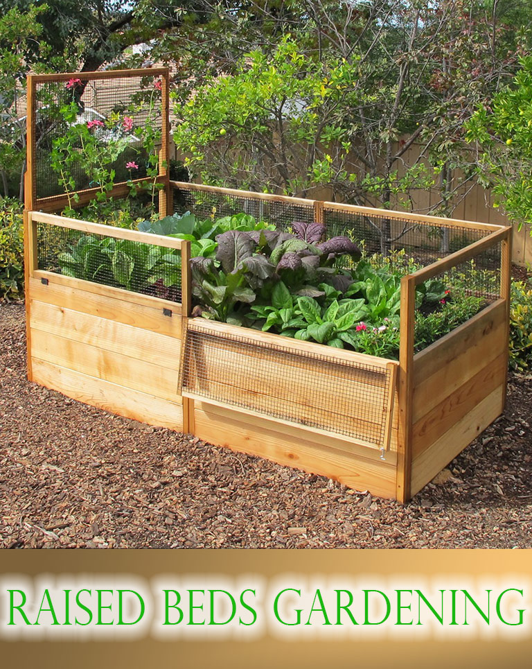 Vegetable Gardening with Raised Beds