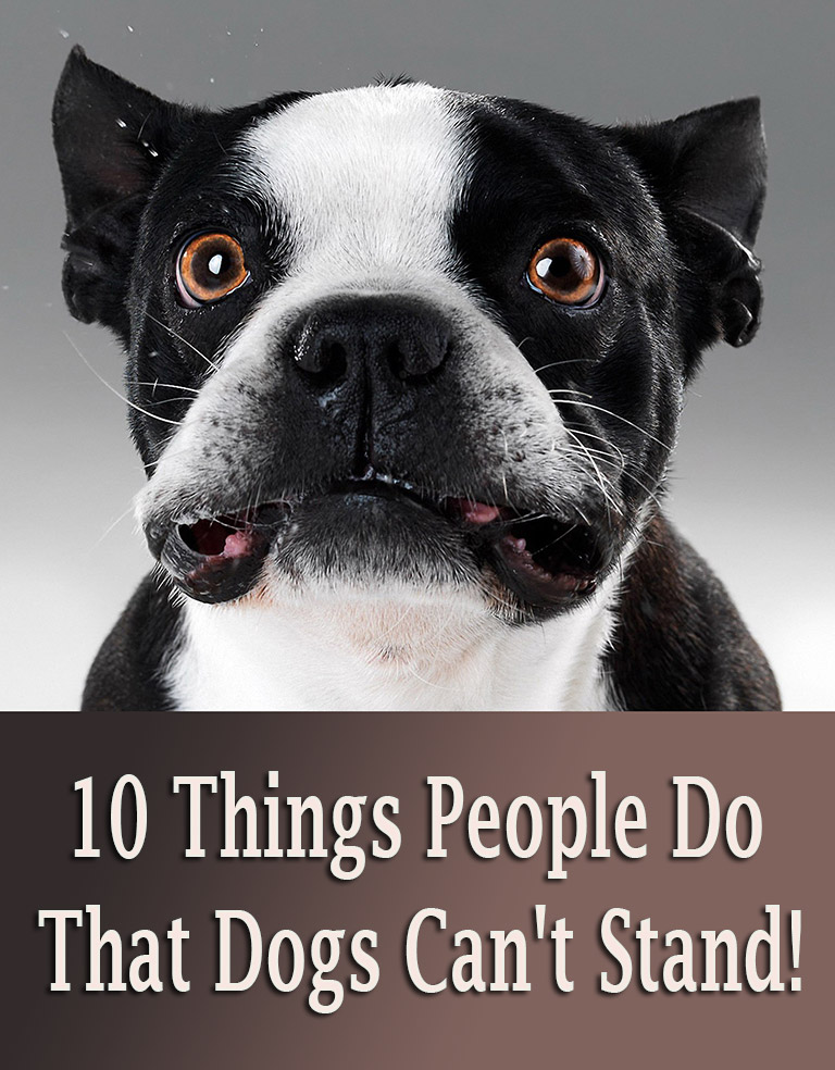 10 Things People Do That Dogs Can't Stand