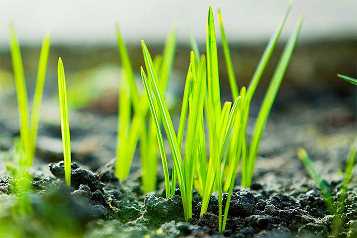 Repair Bare Spots in Your Lawn