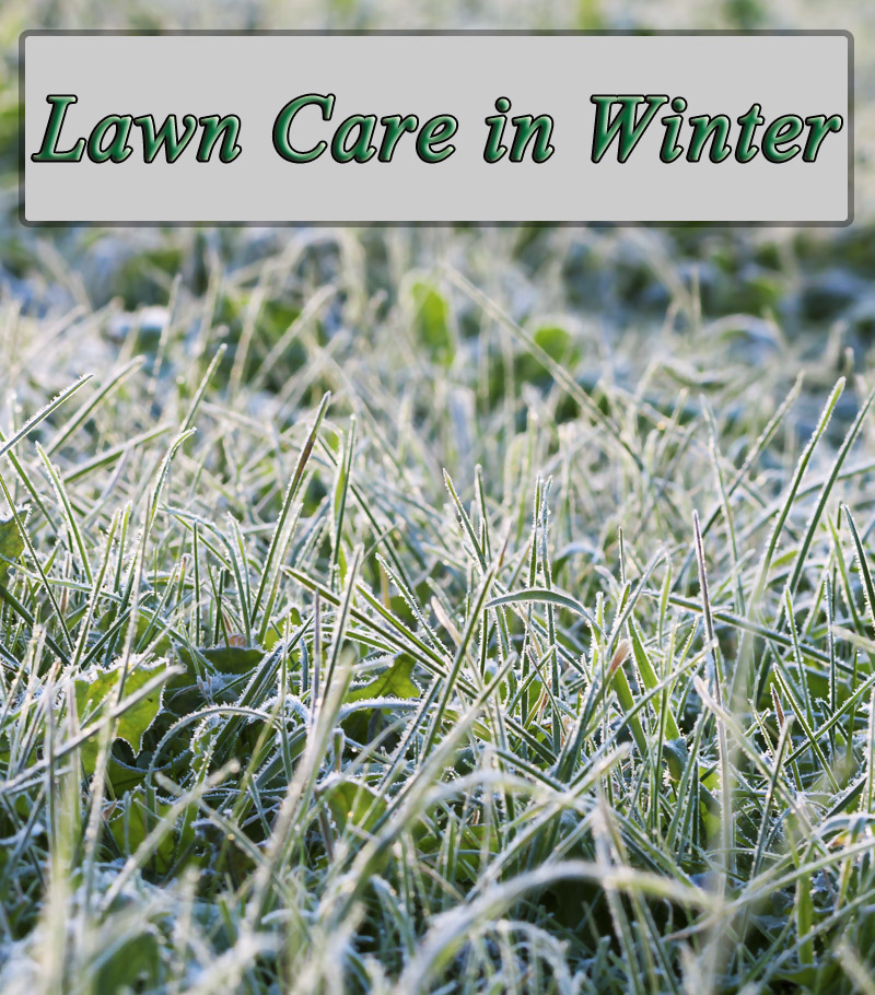 Lawn Care in Winter - Tips