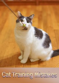Cat Training Mistakes 11