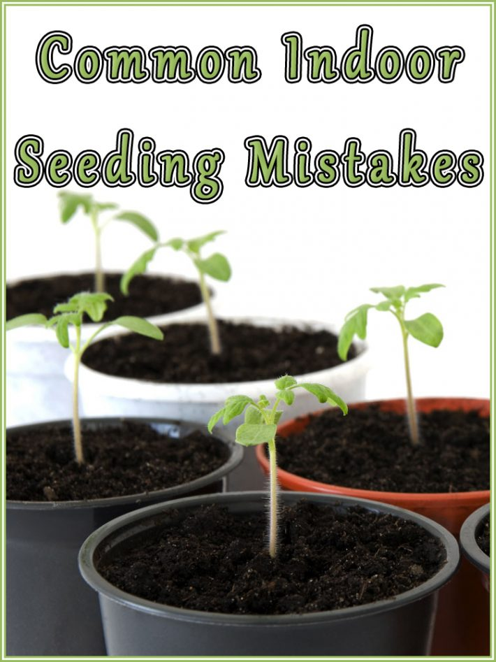 Common Indoor Seeding Mistakes