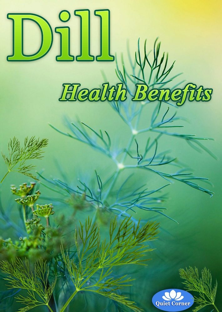 Dill – Health Benefits