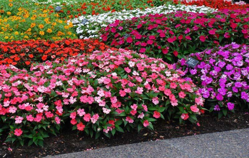 Similiar flower bushes that bloom all summer long keywords perennial flowers that bloom all summer flowers ideas mightylinksfo