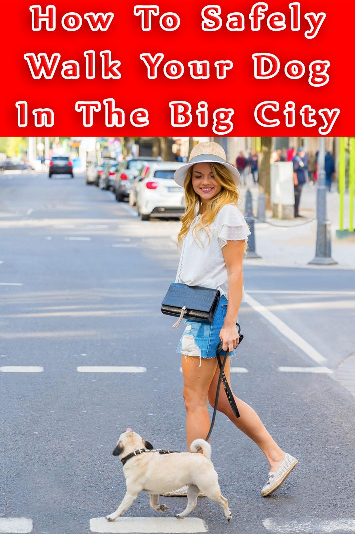 How To Safely Walk Your Dog In The Big City