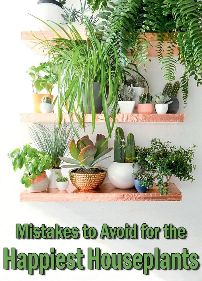 Mistakes to Avoid for the Happiest Houseplants