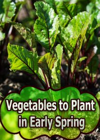 Vegetables to Plant in Early Spring