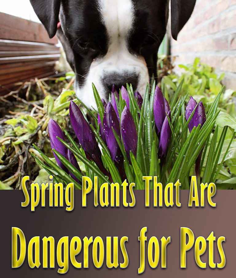 Spring Plants That Are Dangerous for Pets