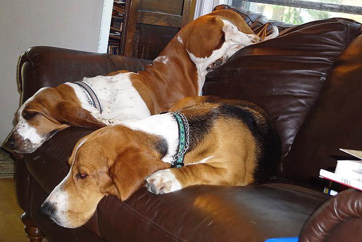 10 Most Laid-Back Dog Breeds