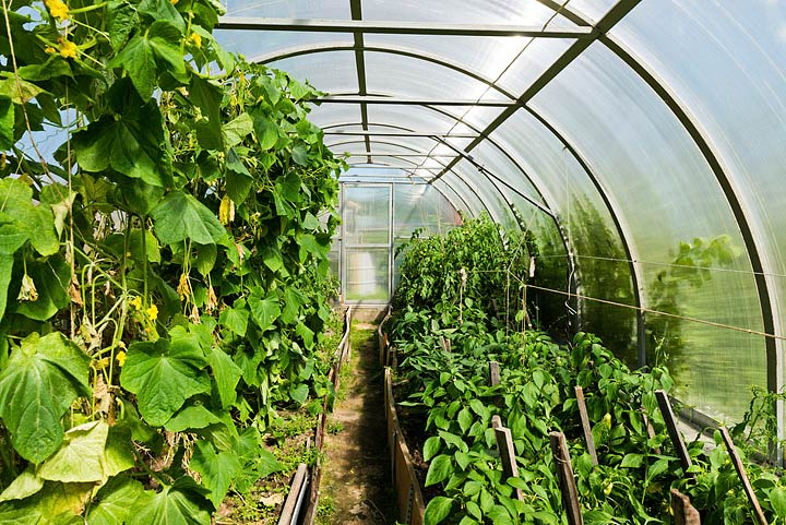 Greenhouse Gardening Benefits
