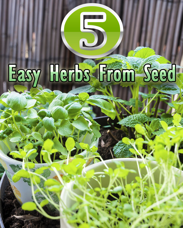 5 Easy Herbs From Seed