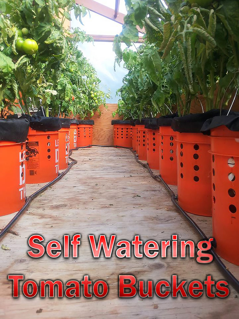 DIY – Self Watering Tomato Buckets