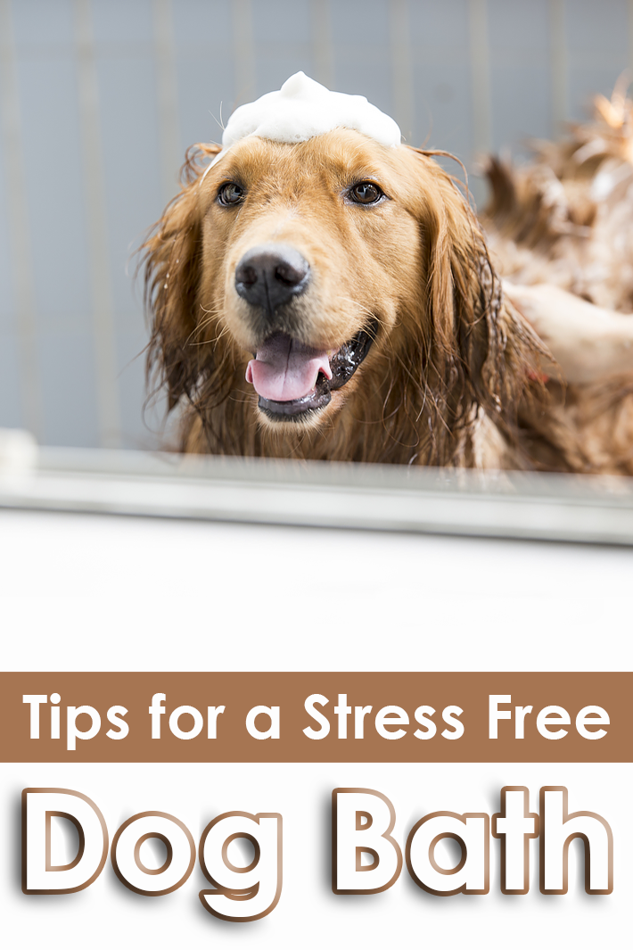 Tips for a Stress Free Dog Bath