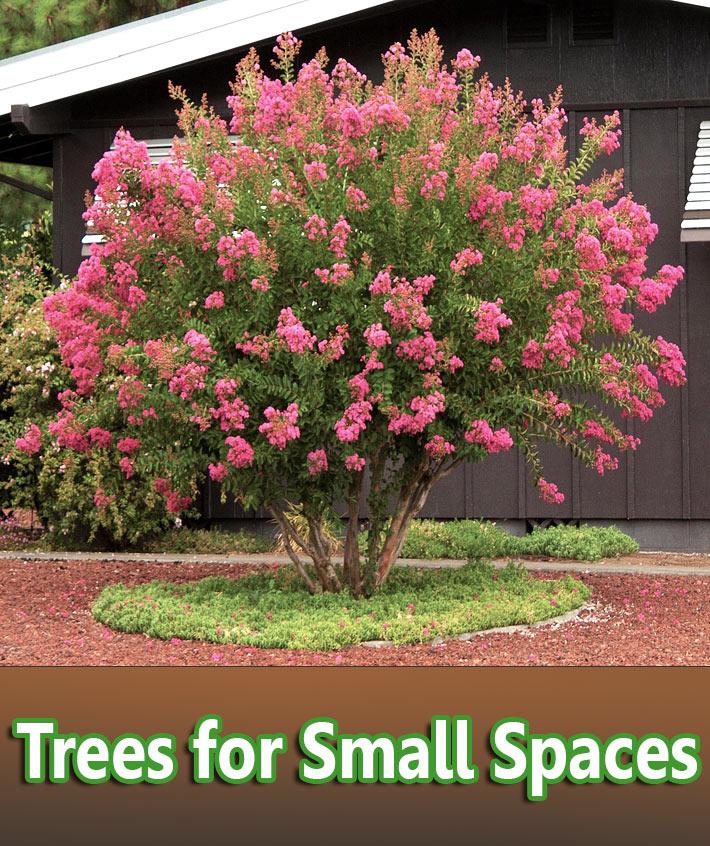 Small Garden Ideas Design Corner