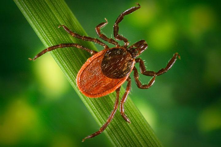 Smart Tips for Avoiding Ticks This Summer