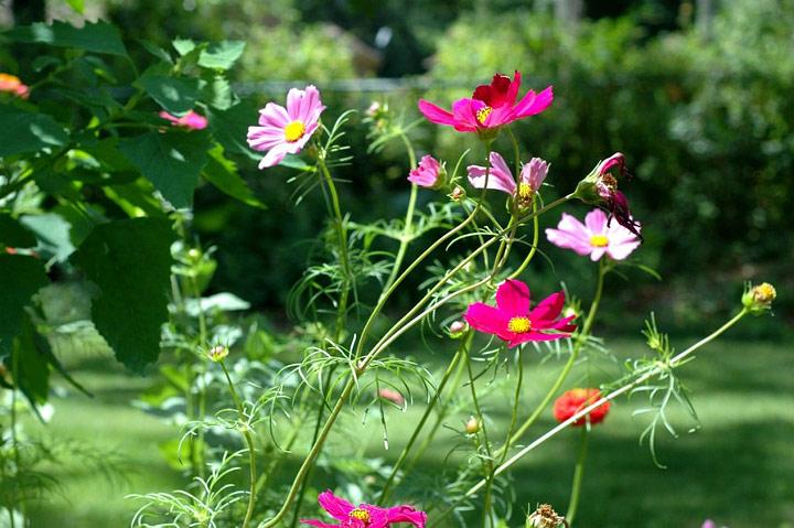 Gardening With Nature – Wildflower Garden