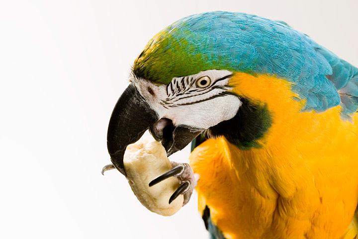 Foods Birds Should Avoid