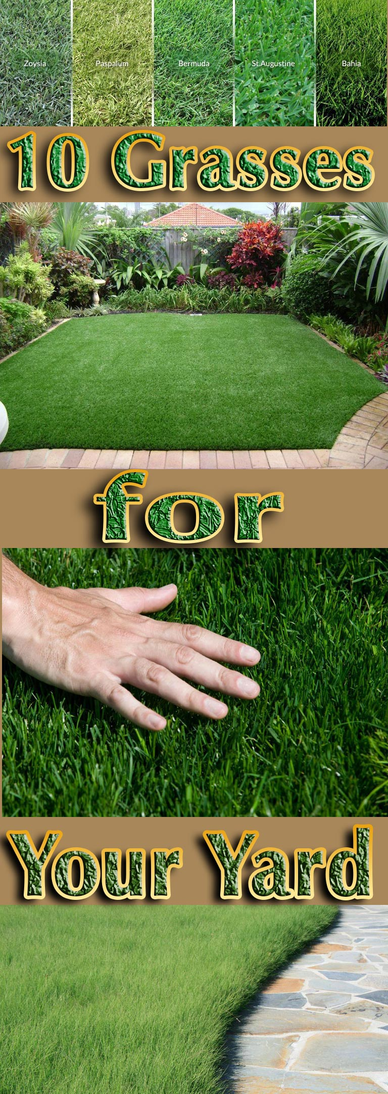 10 Grasses for Your Yard