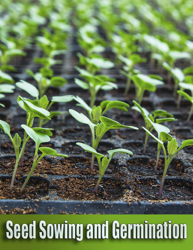 Seed Sowing and Germination – Common Mistakes