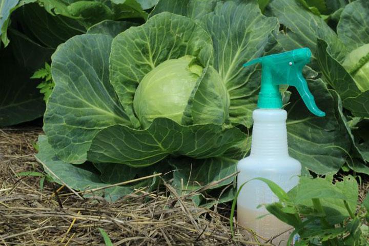 DIY Homemade Organic Pesticides