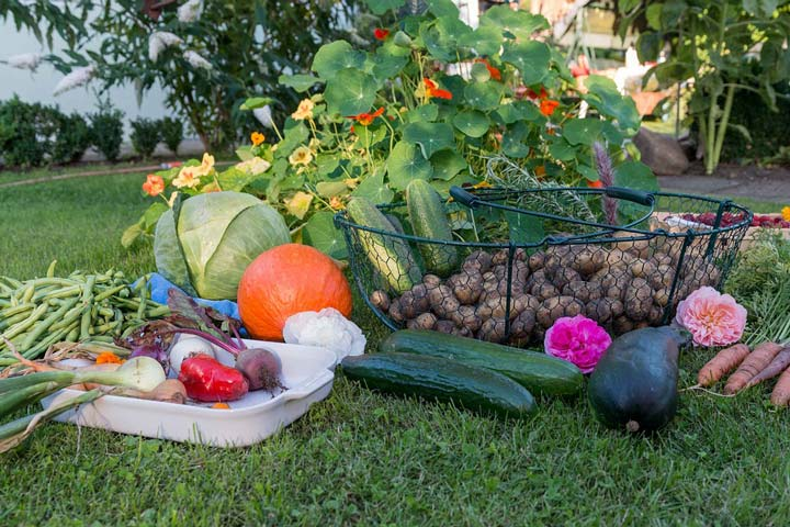Growing Warm Season Vegetables
