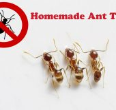 Flying Ants Naturally Homemade Ant Traps Clever Ideas For Decorating