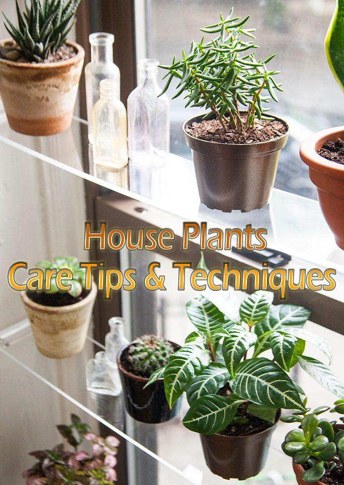 House Plants – Care Tips & Techniques