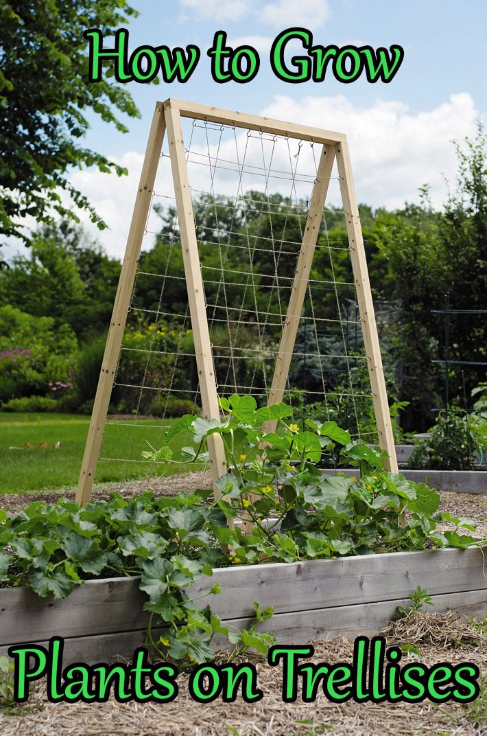 How to Grow Plants on Trellises