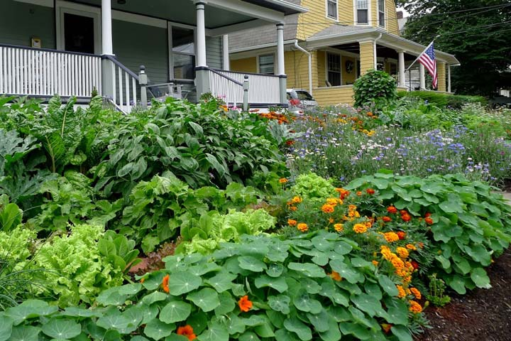 The Best Plants for Edible Gardens