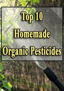 Top 10 Homemade Organic Pesticides