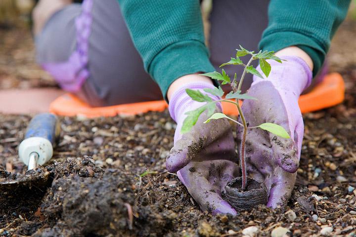 Better Gardening Through Science