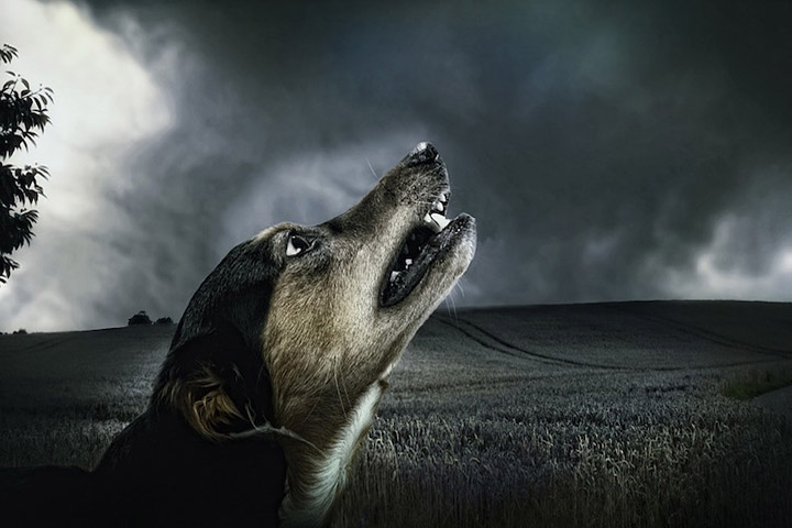 Can a Dog Sense a Natural Disaster?
