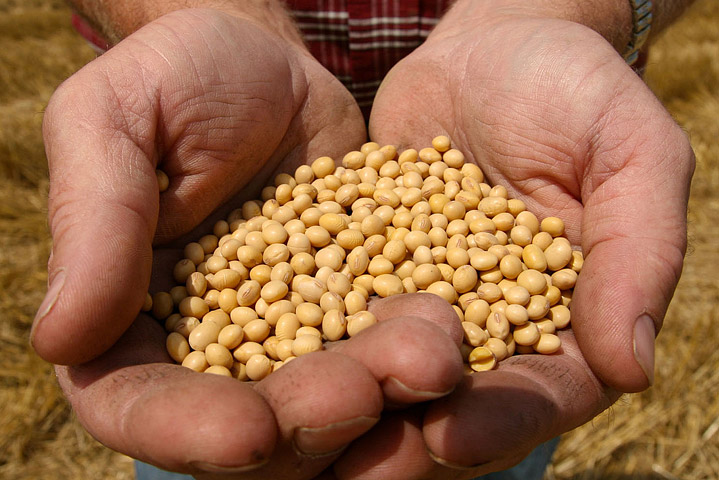 Monsanto and GMO – Quick Facts