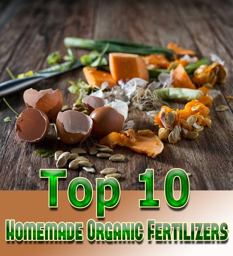 Top 10 Homemade Organic Fertilizers