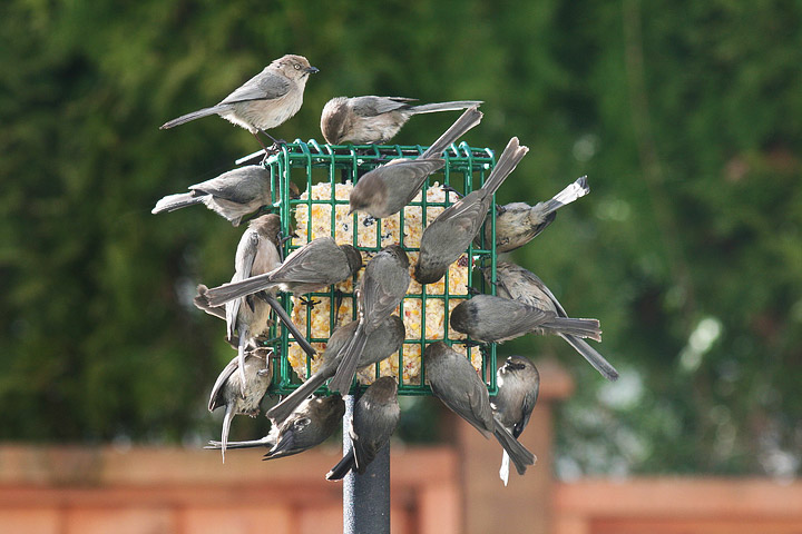 Wild Birds Feeding - Questions & Answers