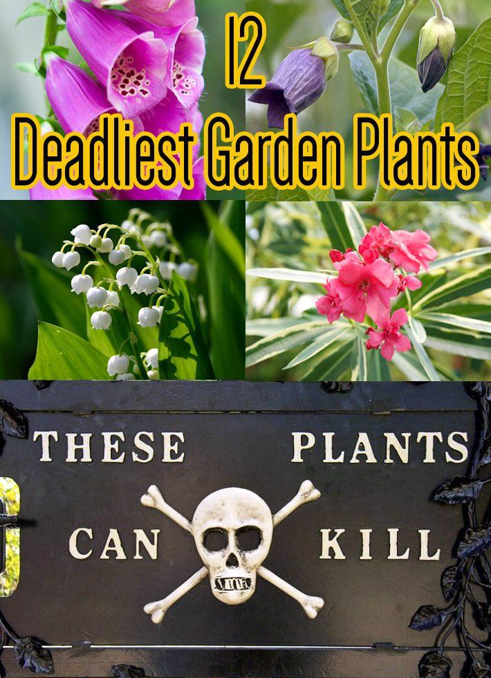 Toxic Plants – 12 Deadliest Garden Plants